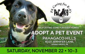 Adopt a Dog Event