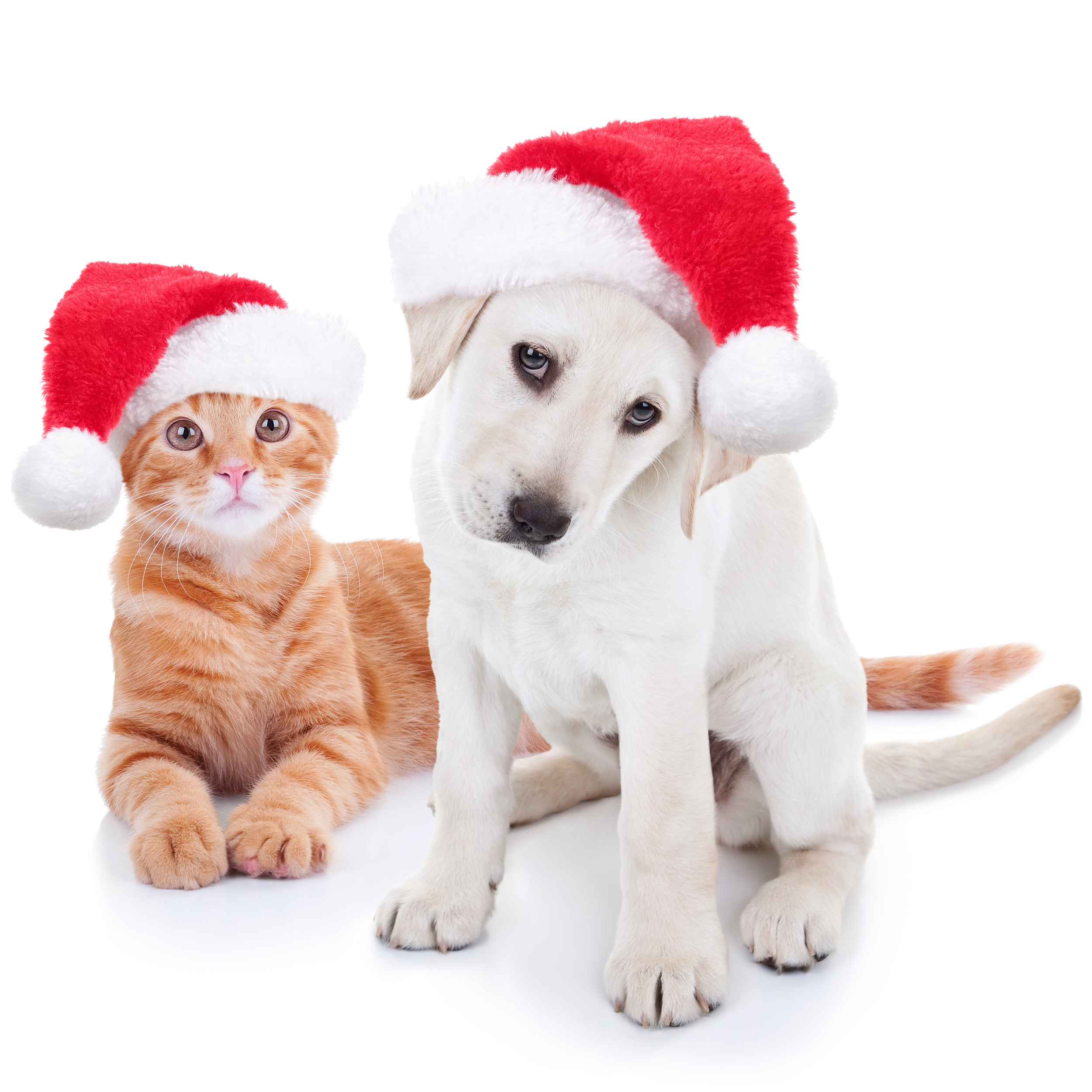 S&A Homes Presents Hosting the Holidays with Pets
